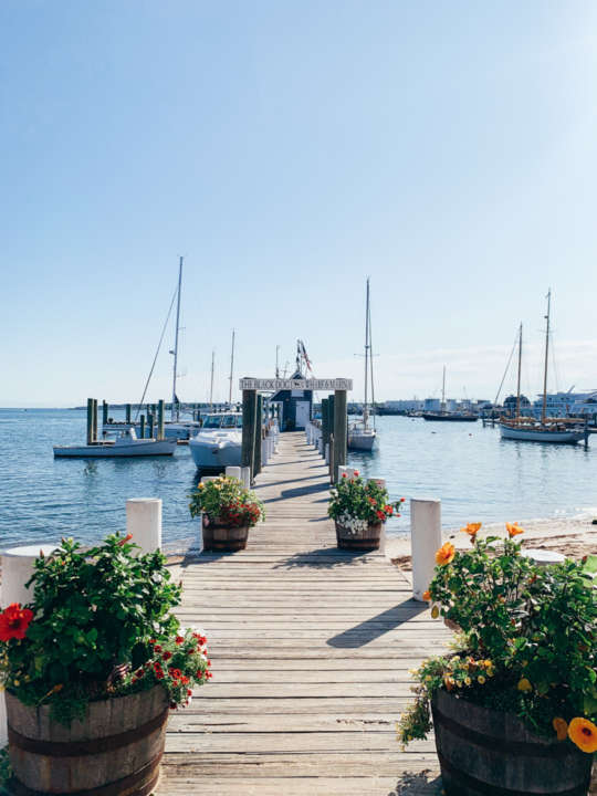 Beautiful dock with flowers leading out to the water