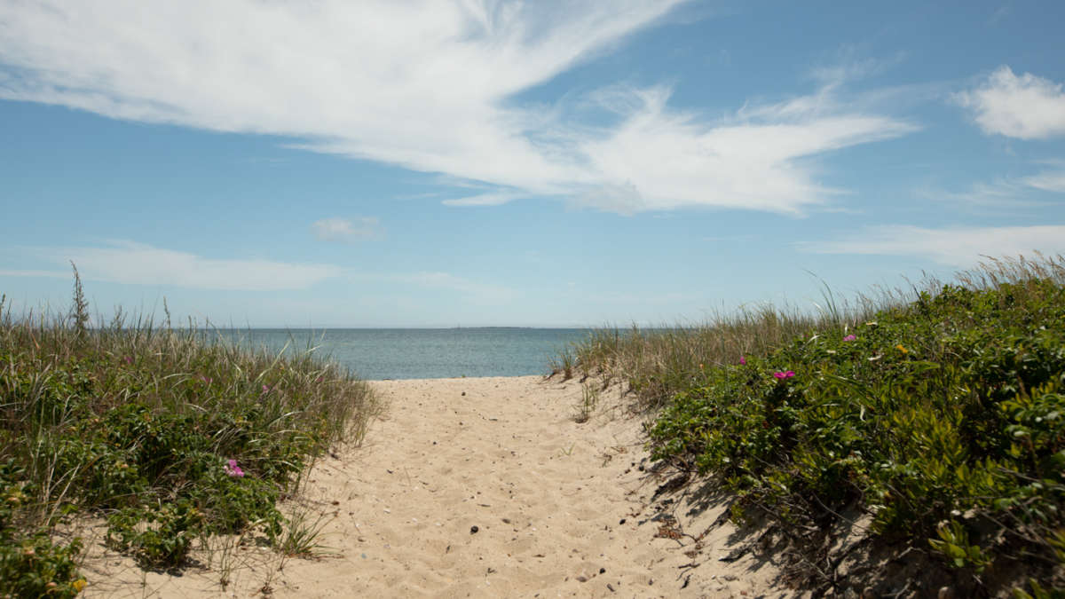 Sandy path to the beach with grass on the sides