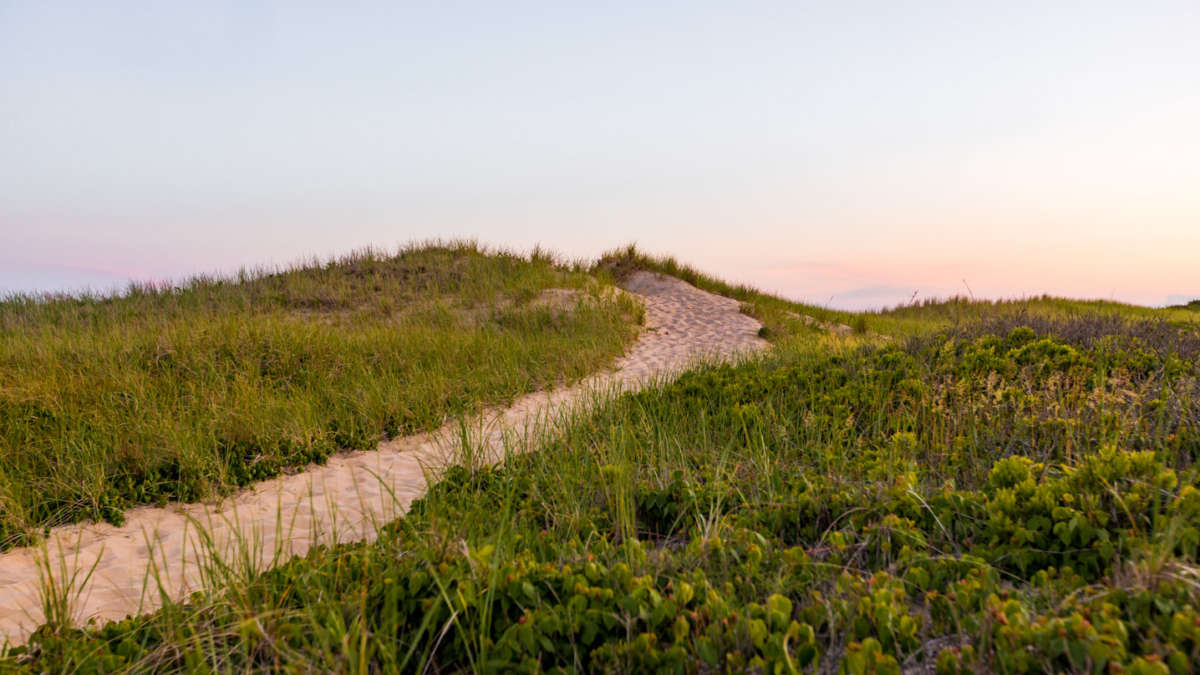 Sandy pathway to the beach surrounded by grass