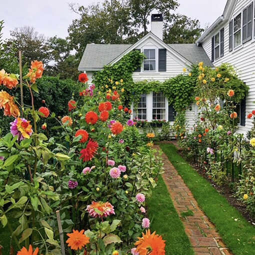 Emily Post House and her gardens covered in dahlias in the fall.