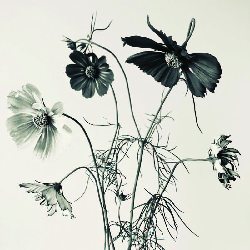 a black and white image of flowers