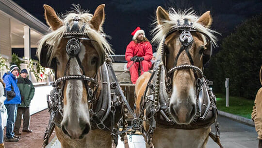 Horse Carriage Rides at Harbor View Hotel