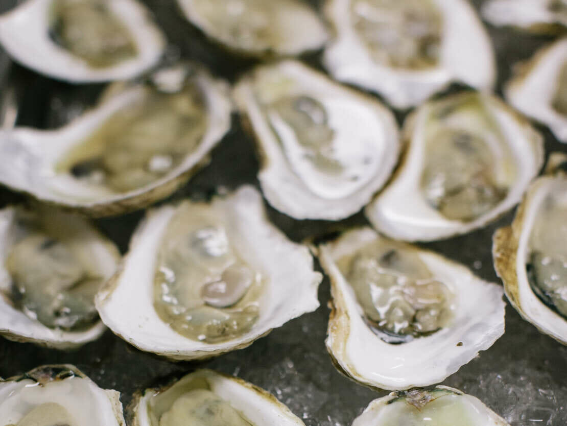 oysters in shells over ice