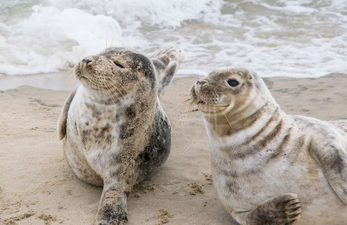 two seals in the ocean